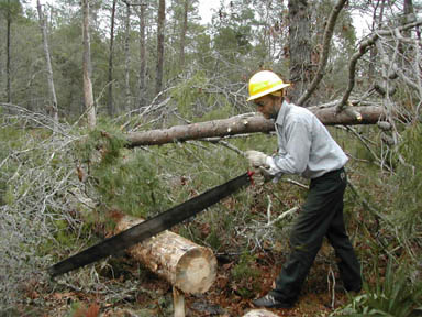 A man in a yellow hard hat, using a very large hand saw to cut a fallen tree into movable sections.