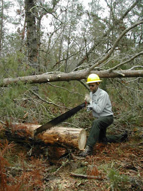 A man in a yellow hard hat, kneeling next to a fallen tree, carefully cutting it into sections with a large hand saw.