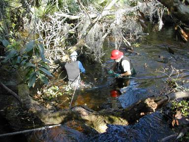 Two men wearing hard hats, standing knee-deep in water working to clear fallen trees.