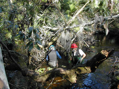 Two men in hard hats, working in a small stream, to clear fallen trees.