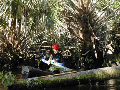 A worker in a red hard hat and a wet suit, working waist deep in water amid the dense undergrowth, using a large hand saw to section a floating tree.