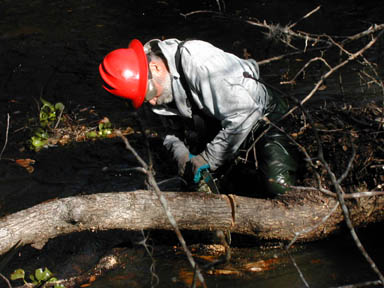 A man in a red hard hat, standing in knee-deep water, using a hand saw to cut a fallen tree into sections.
