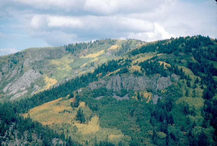 A large forested hill, mottled with stripes of evergreen trees and large groves of deciduous trees in bright yellow autumn color.