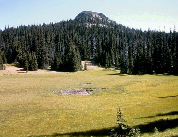 A large open meadow, surrounded by dense forest, and a large rock outcropping in the distance.