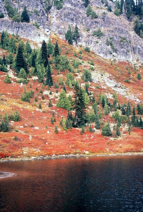 Fiery red tundra dotted with green spruce trees, rising from the black waters of an alpine lake, to a rock face high above.