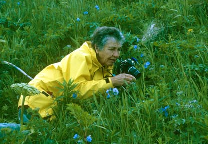 An elderly woman in a yellow raincoat, photographing a patch of blue wildflowers.