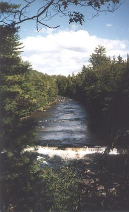 Looking over a short falls down over a small river channel, bordered by dense green forest.