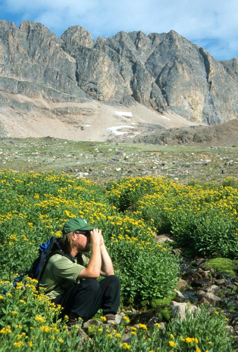 A lone hiker looking through binoculars, surrounded by a large patch of yellow flowers. High rocky cliffs rise towards the sky in the background.