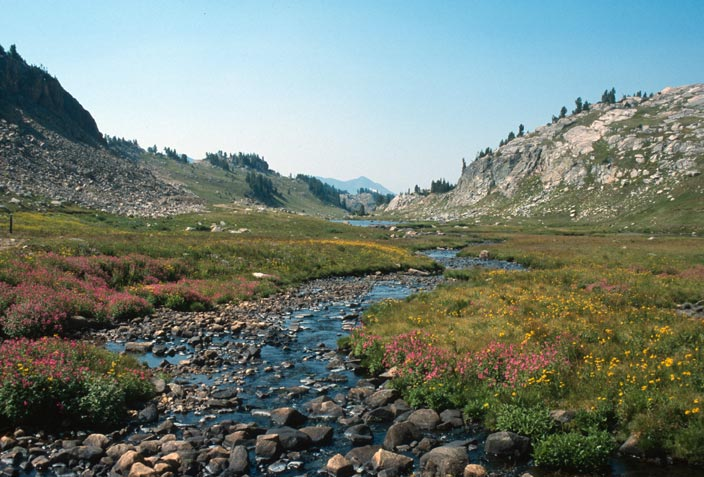 An open alpine valley, a small stream flowing through the meadow dotted with pink and yellow wildflowers.