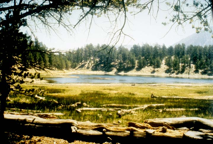 Looking out beneath the trees to a large pond, surrounded by marshy grass and open forest beyond.