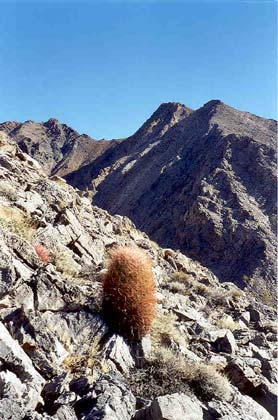 A lone orang colored cactus perched on a gray rocky slope along the edge of a deep shadowed ravine.