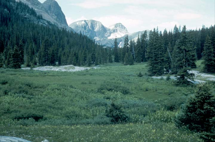 A large open meadow bordered by open forest with high rock faces rising in the distance.