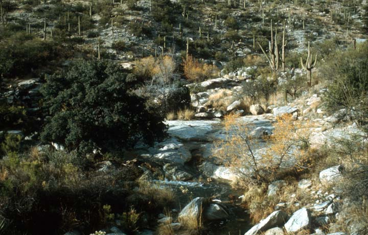 A small stream flowing through the landscape of cactus, intermixed with green brush and gray rock.