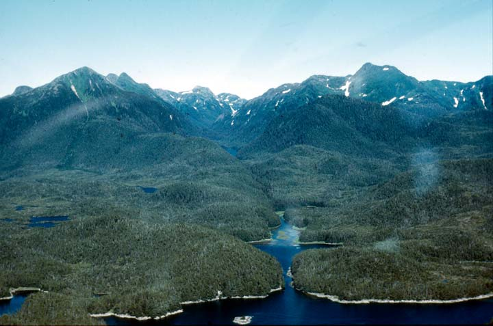 An aerial view of dense forest along the coast, reaching up to rocky peaks in the distance.