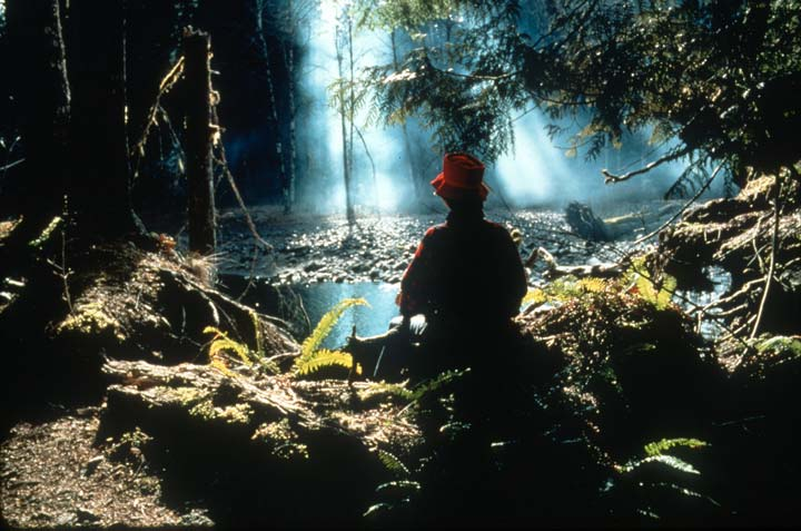A man in a red hat sitting on a rock surrounded by forest undergrowth, as rays of sunlight shine through the dense forest beyond.