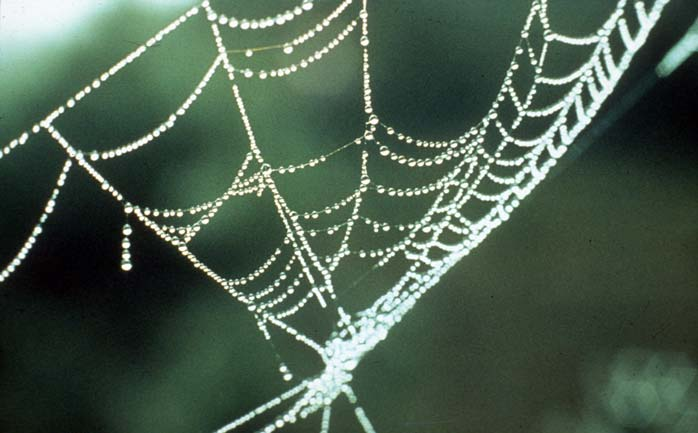A close-up of a spider web heavy with drops of dew.