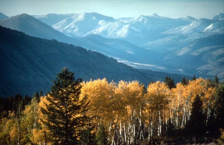 Looking over a stand of trees in bright yellow autumn foliage to low mountains in the distance leading into a large valley below.
