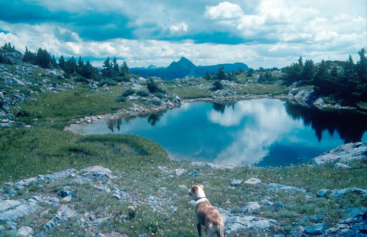 A brown dog standing next to a small alpine pond, the placid water reflecting the broken blue sky above.