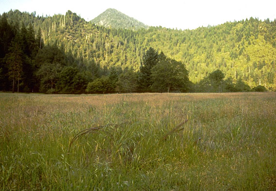 A large open meadow bordered by a large forest ridge, a single tree-covered peak rising beyond.