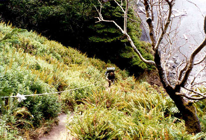 A man following a rope up a steep narrow trail, bordered by dense green foliage and barren trees.