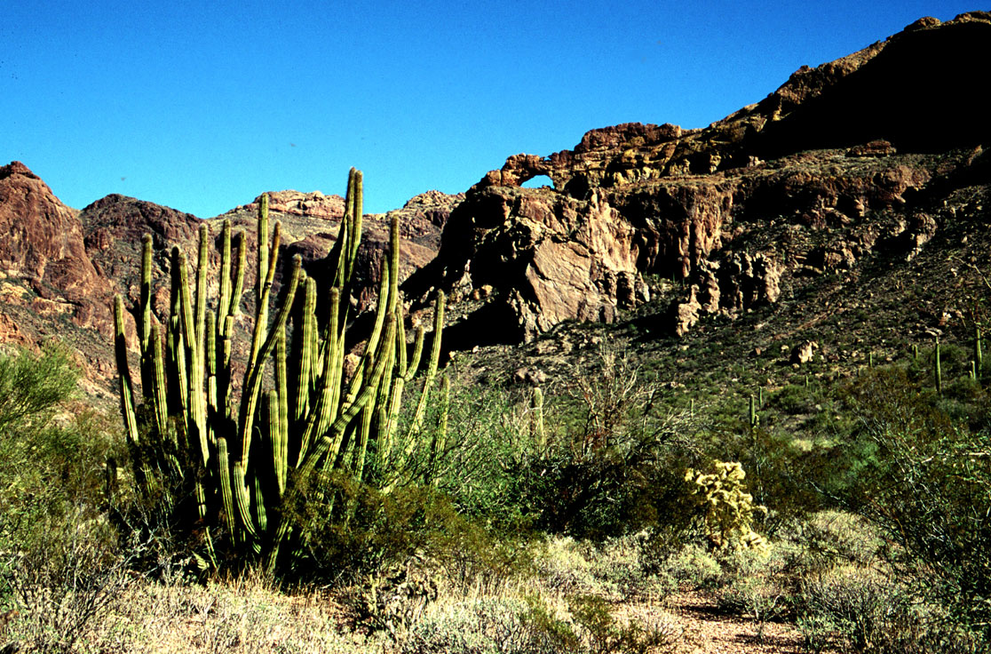 A lone clump of green cactus surrounded by scraggly brush, leading up the slope behind, to high sandstone arches and jumbled ridges.