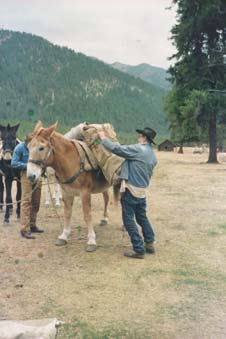 A man in a cowboy hat, loading a package onto a large pack mule.