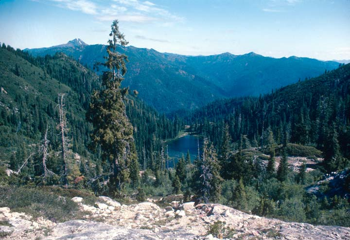 A small lake nestled in a dense forest valley, surrounded by tall evergreen trees.