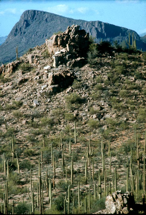 A desert landscape of tall cactus and low green shrubs in the foreground, surrounding a large rock outcropping. A high mountain face rises in the distance.