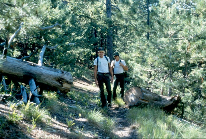 Two men in white shirts walking along a forest trail, past a large windfall tree cut on either side of the trail.