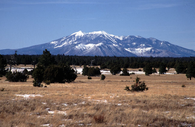 Golden grassland dotted with small trees and patches of snow. High snow covered mountains tower in the distance, above the surrounding forest.