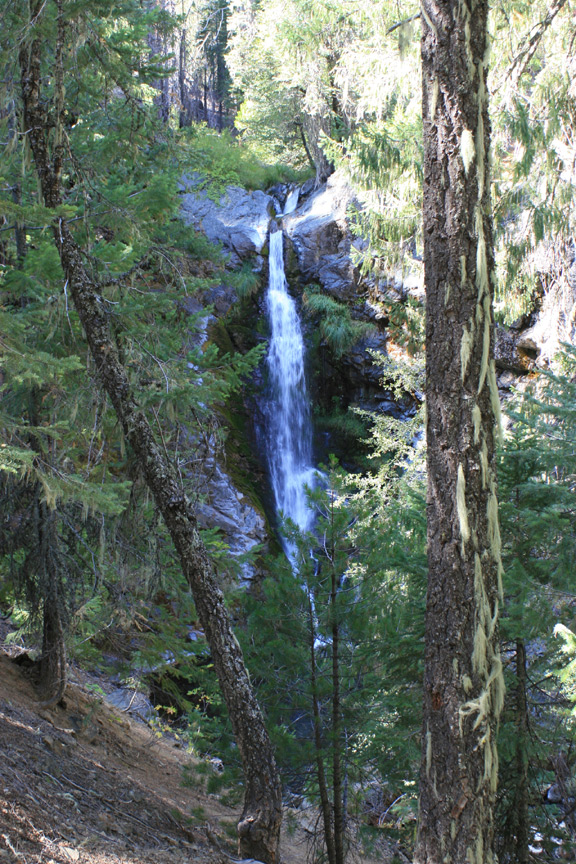 Tall trees frame a small waterfall in the background.