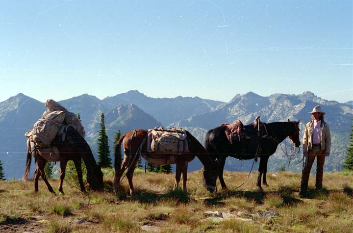 Cowboy standing next to three pack horses with mountains in the background.