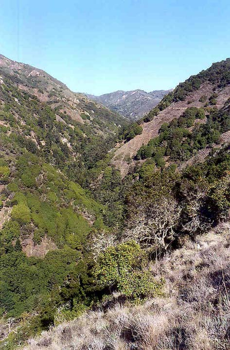 Looking down an open slope to a narrow ravine below, green trees dotting the surrounding hills, funneling to the base.