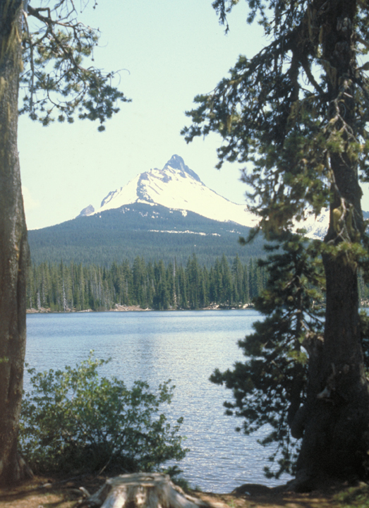 A lake is surrounded by pine trees and overshadowed by a massive, snow kissed mountain.