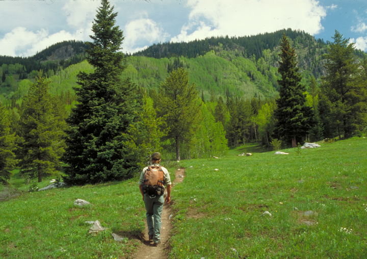 A lone hiker wanders down a thin brown path.  The green field that surrounds him is lush, as are the trees into which he is headed.
