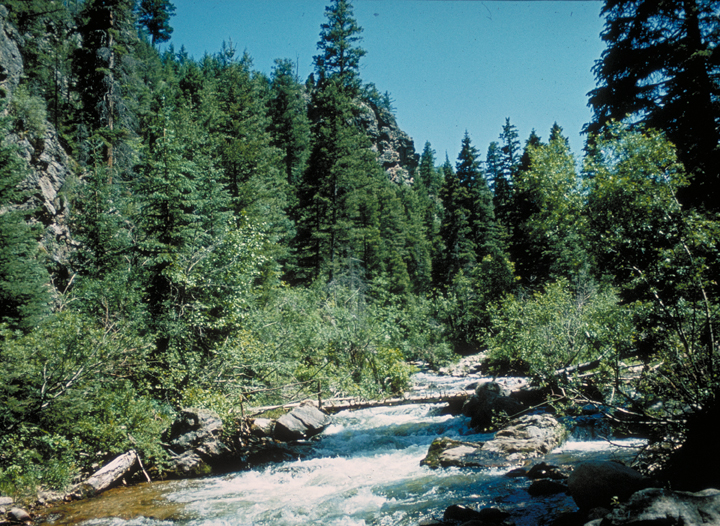 A river foams its way over various bracken obstacles.  A green forest surrounds.