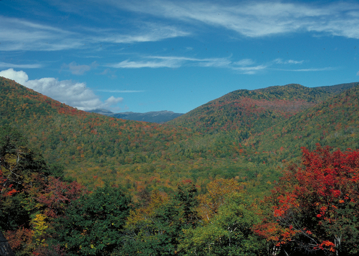 Most of the trees are sharp green, clinging to their summer leaves.  Some, however, are a blistering reds or glowing yellow.