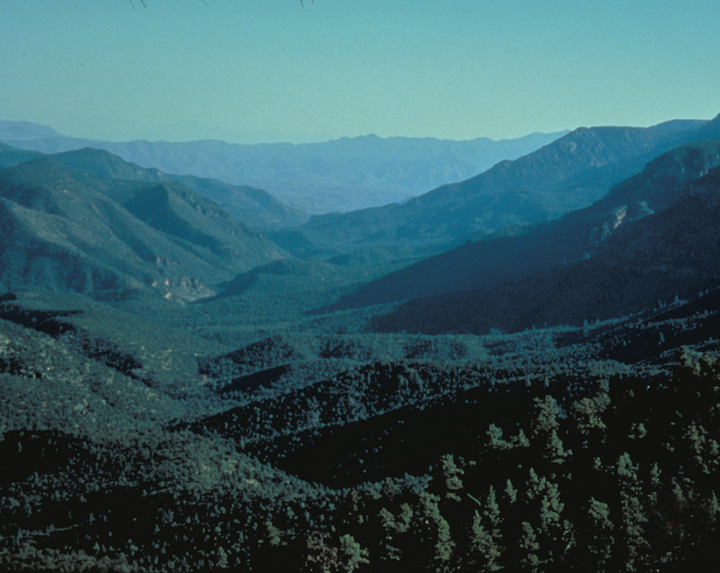 The hills roll gently, then spike suddenly into dramatic ridges.  The valley is heavily forested.