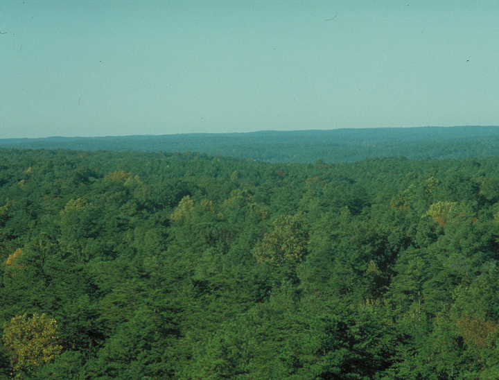 This aerial shot looks out over green treetops for as far as the eye can see.
