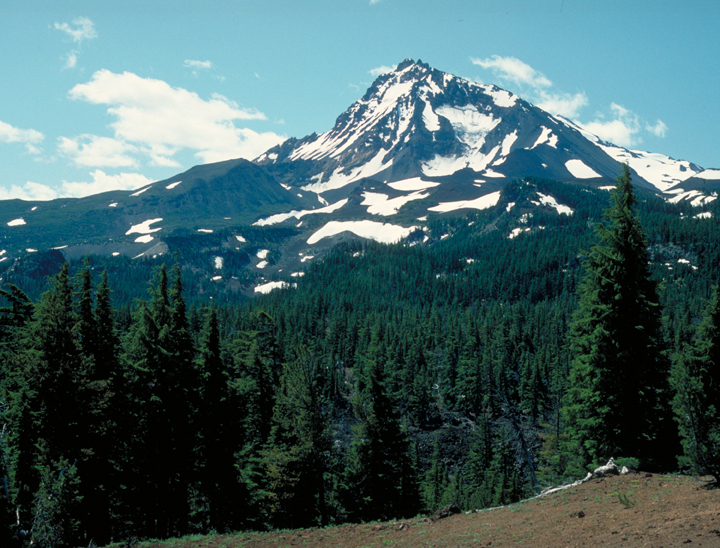A snow covered peak dominates the background of the picture, while a green forest flourishes in the foreground.