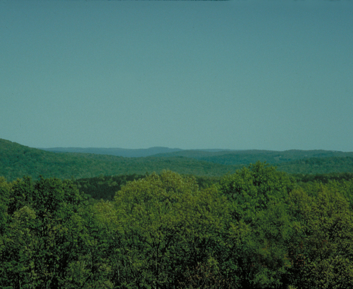The treetops are green and the sky is blue.  The greenery goes off to the horizon.