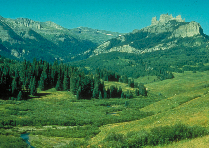 A gorgeous green valley meadow rolls out into the distance, where it means a line of pines.  Rocky mountains mark the horizon.