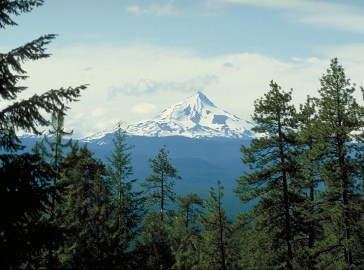 The treetops do not obscure the view of a lone snowy peak far off in the distance.