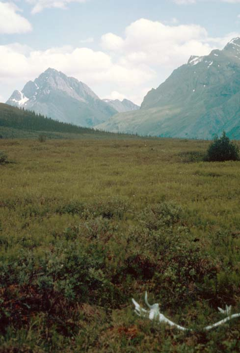 A bleached caribou antler lying in the low tundra, looking up a narrow valley to massive peaks in the distance.