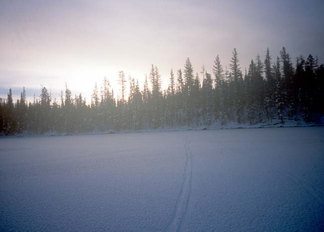 A lone ski track, leading off towards the sunrise along the edge of a frozen lake bordered by forest trees.