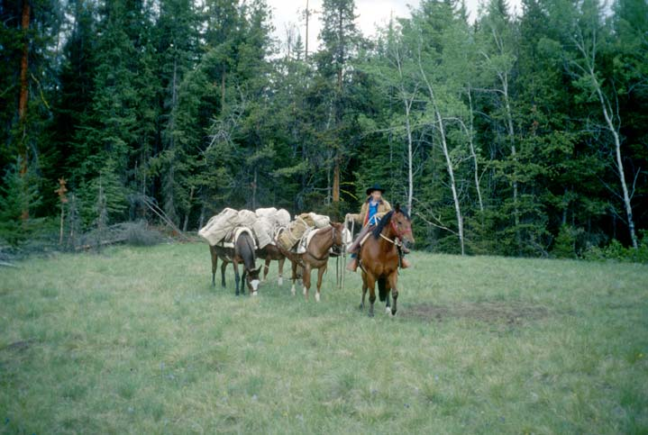A person sitting on a horse, leading three pack horses loaded through a small forest meadow.