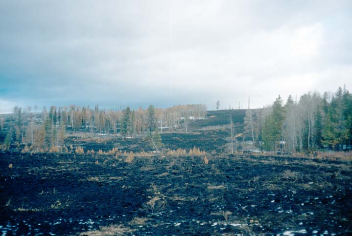 A large area of burned forest, the blackened ground interrupted by random stands of untouched trees.