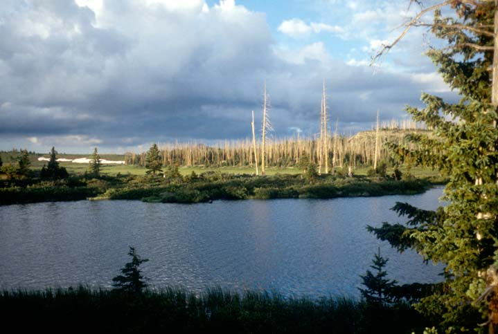 A small lake surrounded by marshy meadow and burned forest, under a partly cloudy sky and warm evening light.
