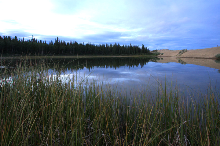 Tall reeds frame the near side of a still lake.  The far edge is rimmed by tall, dark trees.