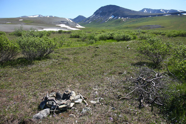 A small arrangement of rocks and brushes sits on a green field.  Mountains are in the distance.